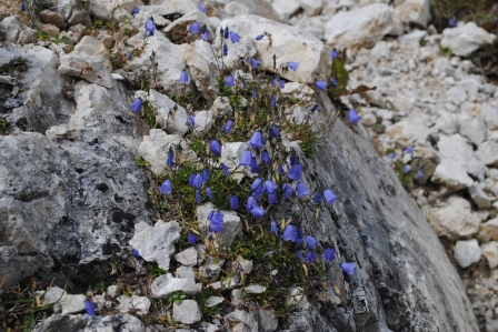 Alpine bells