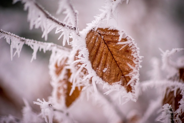 tree-nature-branch-snow-cold-winter-plant-leaf-flower-petal-frost-ice-autumn-weather-frozen-season-twig-close-up-leaves-wintry-winter-magic-hoarfrost-freezing-macro-photography-ice-flowe