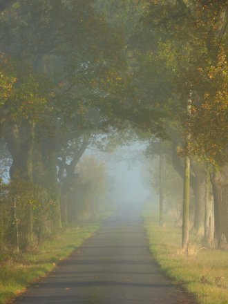 foggy-morning-019