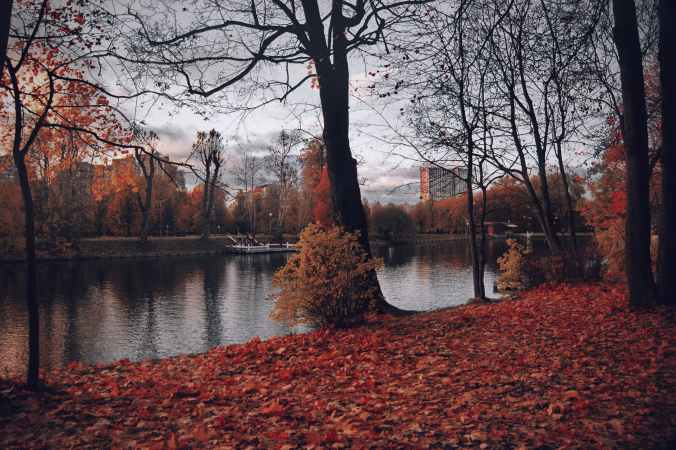 photography of trees near river during fall